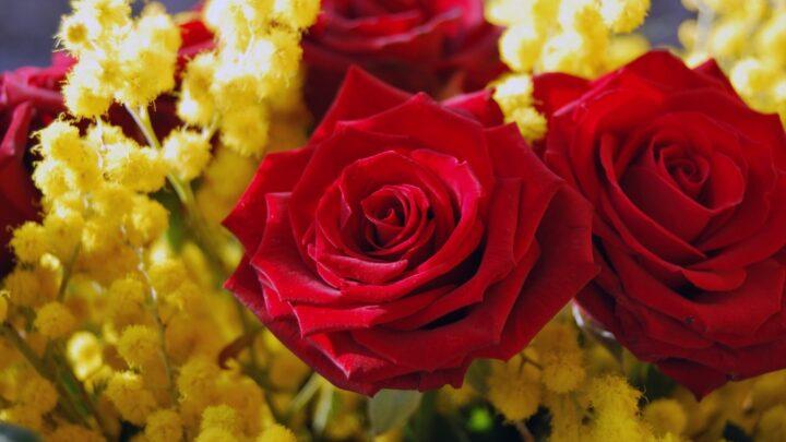 mimose e rose donne donna 8 marzo