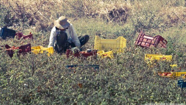 caporalato lavoro nei campi